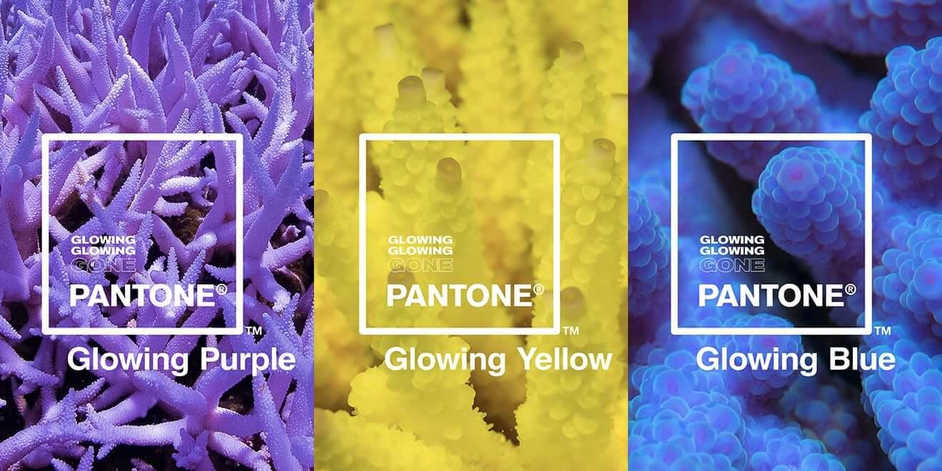 kolory pantone dla raf koralowych