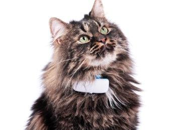 Zaginął pies lub kot? To urządzenie pomoże ci go odnaleźć